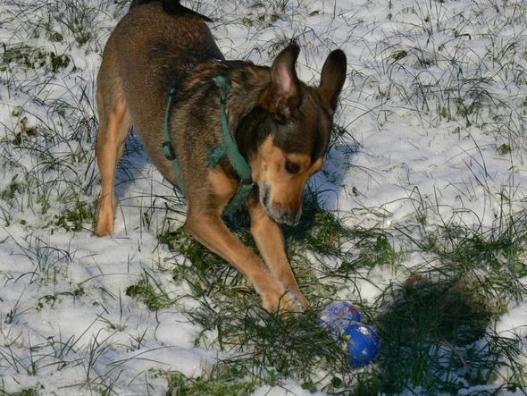 Missi beim Ball spielen - (Freizeit, Unternehmungen)