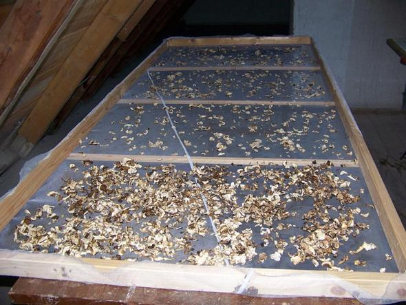 Holzrahmen Pilze trocknen - (Pilze, Pilze richtig trocknen)