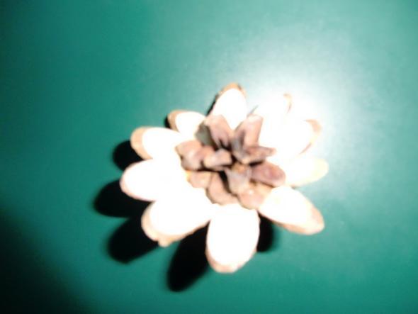 Zapfen Blüten  - (Internet, Weihnachten, Internetseite)