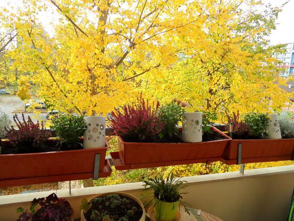 so sieht mein Balkon zur Zeit aus - (Pflege, Pflanzen, Pflanzenpflege)