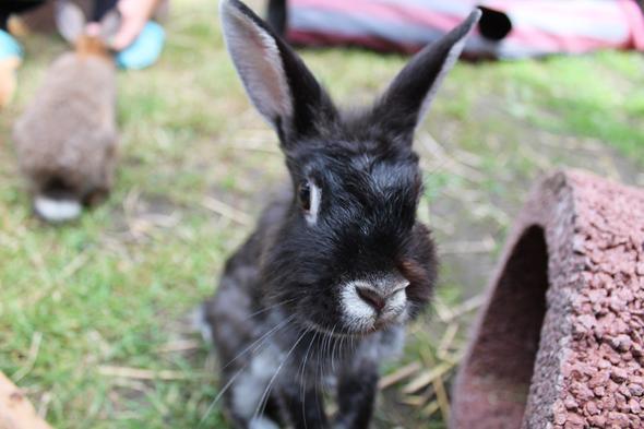 Mona :)  - (Kaninchen, Wunde, Kampf)