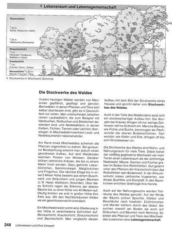 Baumschichten - (Schule, Biologie, Erdkunde)