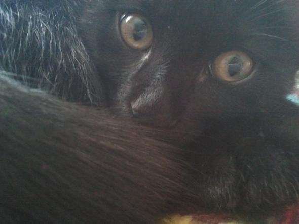 Saphira - (Katze, Name)