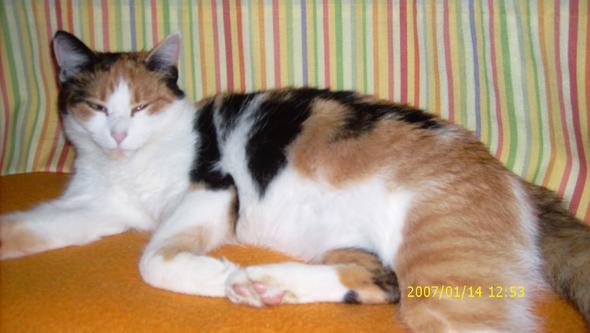 "Meine sehr verspielte Mieze ""Jenna"" :) - (Tiere, Katze, Haustiere)"