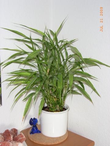 welcher zimmerpflanze ben tigt wenig licht und pflege und h lt lange pflanzen wohnen. Black Bedroom Furniture Sets. Home Design Ideas