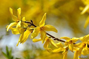 - (Garten, Ostern, gelb)