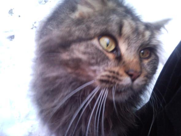 Lilly - (Katzen, Katzenkauf)