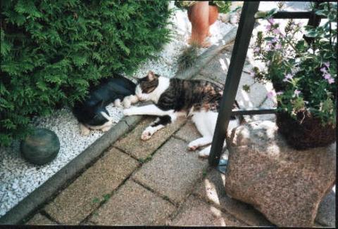 Mittagsschlaf - (Haustiere, Katzen)