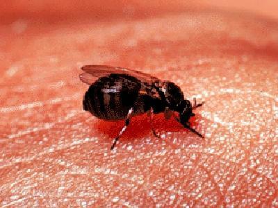 - (Insekten, Stich)