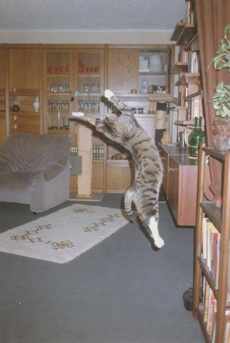 Wie Viel Platz Für Billardtisch : wie viel platz braucht eine katze haustiere kater ~ Articles-book.com Haus und Dekorationen