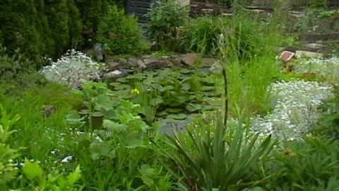- (Garten, Fische, Beratung)