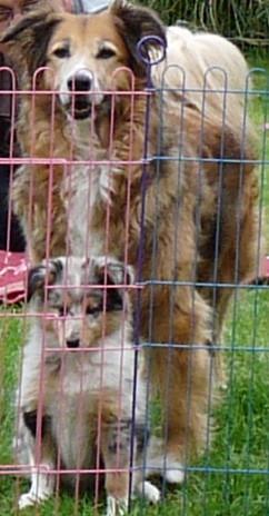 Welpengitter - (Hund, Welpen)