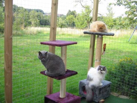 - (Katzen, artgerecht, Freigänger)