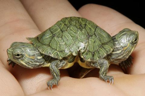 - (Tiere, Schildkröten, Reptilien)