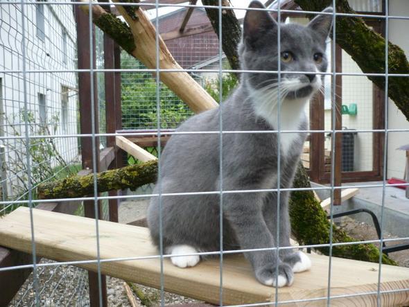 Balou - (Tiere, Katze, Haus)