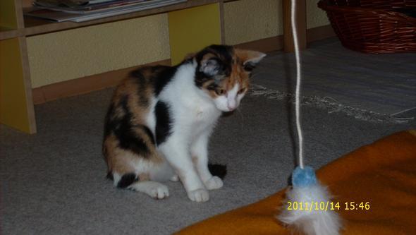 Jenna mit Spieleangel - (Katze, Spielzeug)