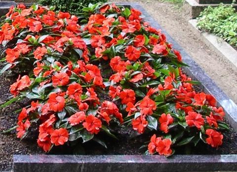 - (Ratgeber, Blumen, Grab)