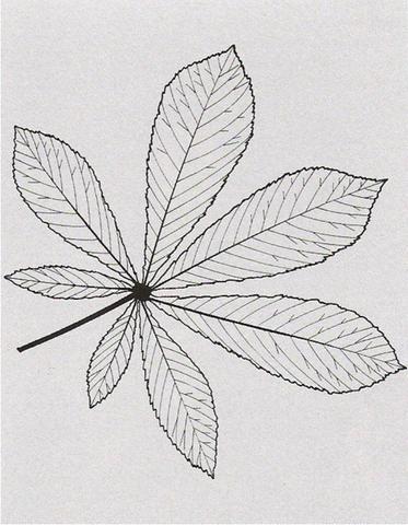 Skizze Blatt - (Schule, Biologie, Bio)