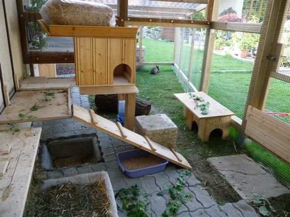 kanninchen draussen kaninchen winter freihaltung. Black Bedroom Furniture Sets. Home Design Ideas