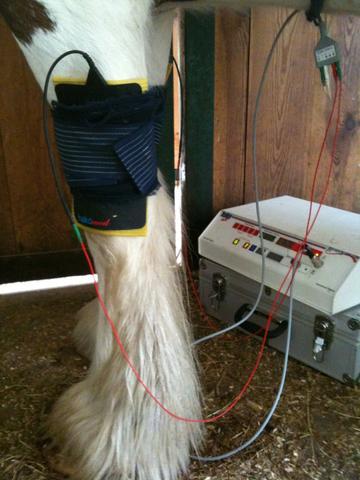 sehr easy im eigenen Stall machbar - (Pferde, Veterinärmedizin, Pferdehusten)