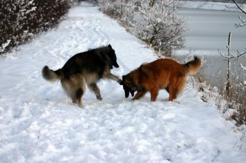 - (Hund, Schäferhund, Tierernährung)