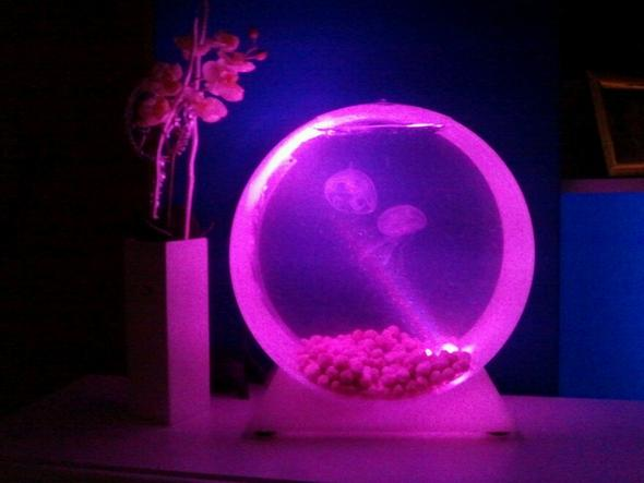 Unser Quallies - (Aquarium, Polypen, wirbellose-tiere)