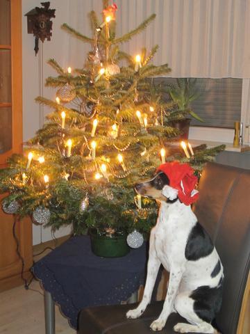 Rike - (Hund, Hunderasse)
