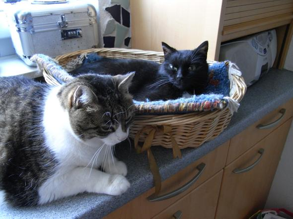 Sissy verabschiedet sich von Pfitschi - (Liebe, Freundschaft, Tiere)