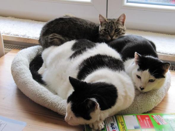 Einzelgänger..... - (Haustiere, Katzen)