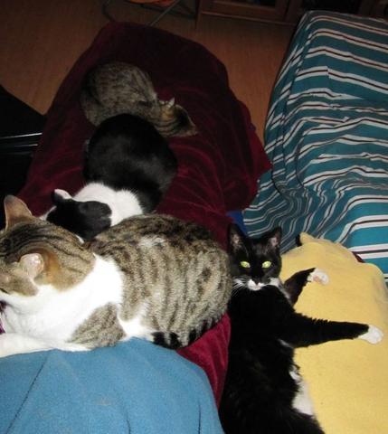 Einzelgänger... - (Haustiere, Katzen)