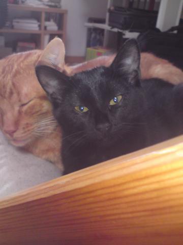 """Kuscheln unter """"Einzelgängern""""... - (Haustiere, Katzen)"""