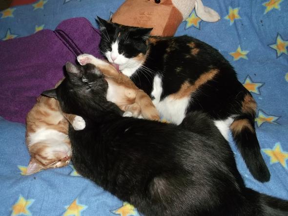 Gruppenkuscheln - (Haustiere, Katzen)