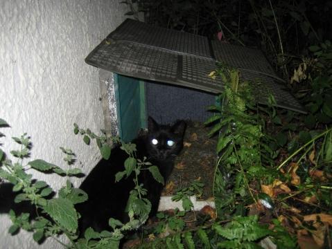 Mit Katze - (Katzen, basteln, Winterhöhle)