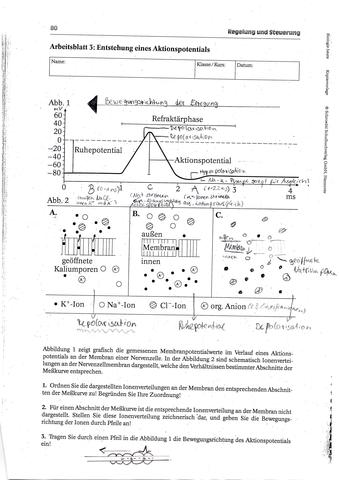 Beautiful Dosierungsberechnungs Arbeitsblatt Component ...