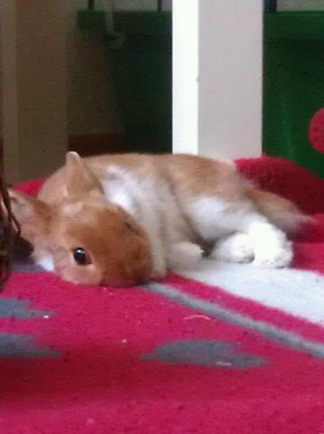 rammler - (Kaninchen, Kaninchen Verhalten)