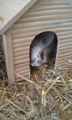 häsin - (Kaninchen, Kaninchen Verhalten)