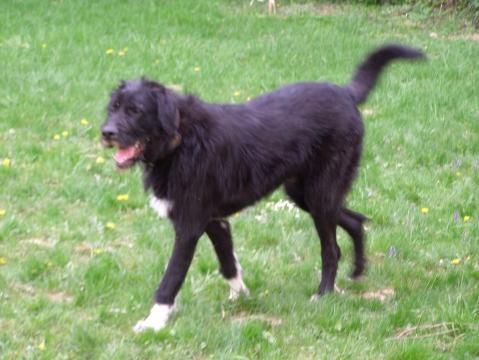 Moo ex Tierheimhund - (Welpen, Tierheim, Mischling)