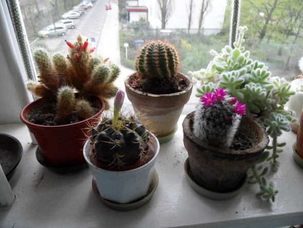 kaktus teilen trennen kakteen. Black Bedroom Furniture Sets. Home Design Ideas