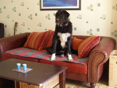 Moo Irischwolfshundmix - (Hund, Hundefutter)