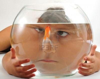 goldfischglas fische aquarium goldfische. Black Bedroom Furniture Sets. Home Design Ideas