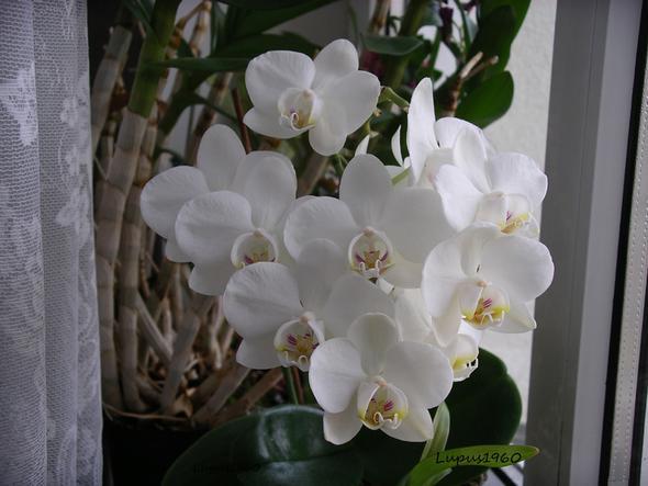 Hilfe Orchidee Hat Schlaffe Blätter Pflanzen Pflege Blumen