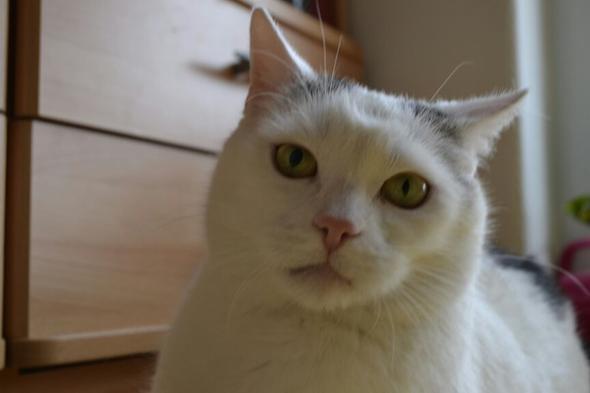 Meine Katze hat zwei unterschiedlich große Pupillen! :oho