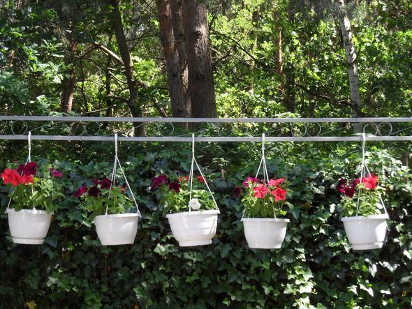 Das sind Ampeln - (Garten, Pflanzen, Blumen)