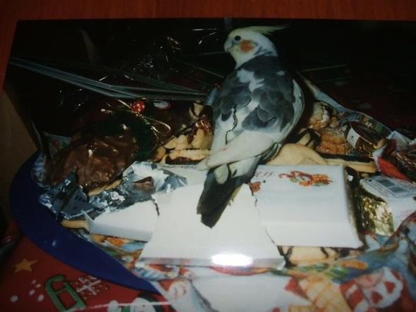 unser Seppington  - (Vögel, Papagei, Sittiche)