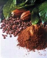 Die Kakaopflanze - Anfangszutat für den / das Kakao(-pulver) - (Gesundheit, essen, Lebensmittel)