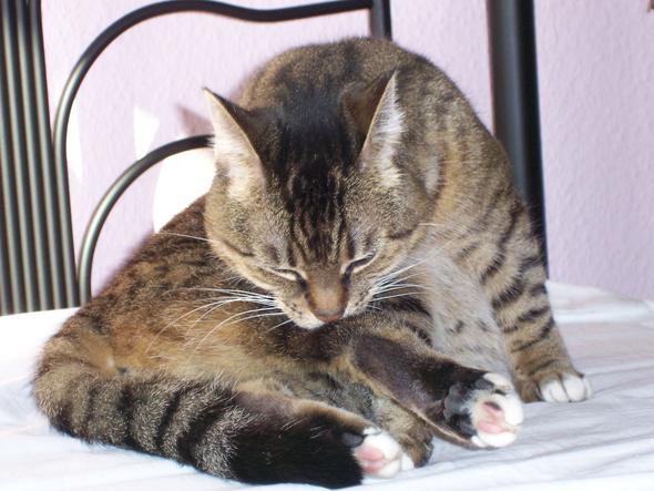 warum putzen sich katzen immer tiere. Black Bedroom Furniture Sets. Home Design Ideas