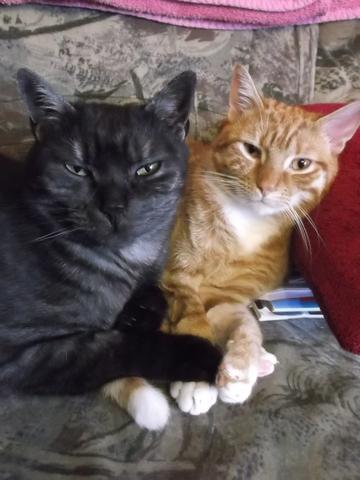 warum sind katzen immer m de katze schlaf m digkeit. Black Bedroom Furniture Sets. Home Design Ideas