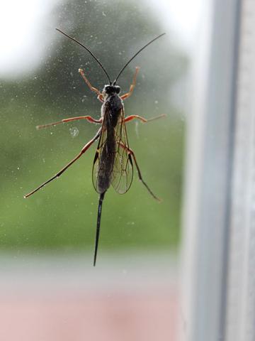 Insekt - (Tiere, Biologie, Garten)
