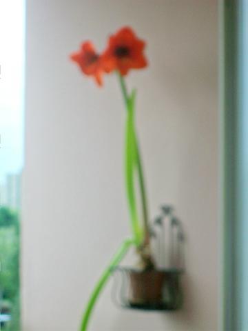 muss man lilien zur ckschneiden haushalt garten pflanzen. Black Bedroom Furniture Sets. Home Design Ideas