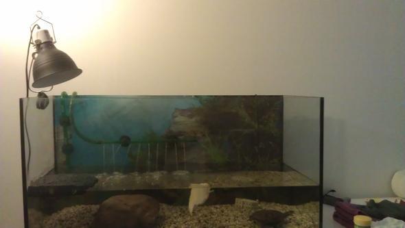 aquarium uv lampe befestigen tiere schildkr ten reptilien. Black Bedroom Furniture Sets. Home Design Ideas
